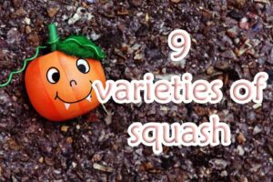 9 varieties of squash and their various uses