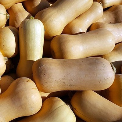 Butternut squash is particularly prominent among the many pumpkins available at the supermarket.