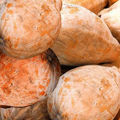 Chinese honey pumpkin is one of the most common varieties of pumpkins that we recognised.