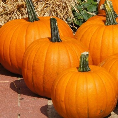 The golden squash is also called the red pumpkin.