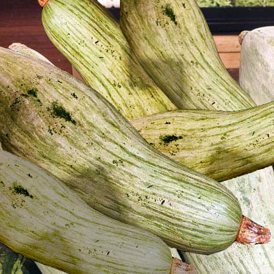 The Jinsi chestnut squash is also called the noble pumpkin.