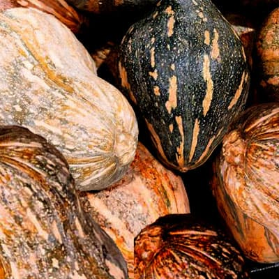Taro squash is also a squash variety that has only emerged in the market in recent years.