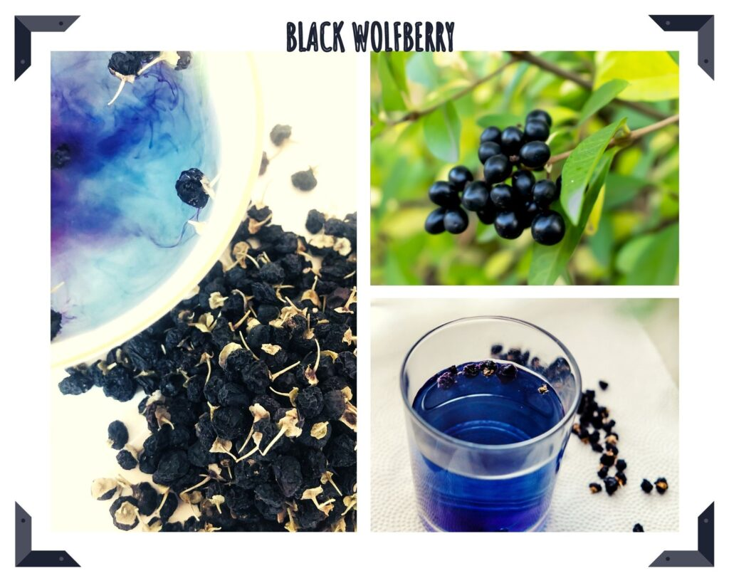 The health value and effects of black wolfberry 1